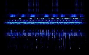 """17 verschiedene Arten kann man auf dieser Aufnahme aus dem Regenwald in Borneo unterscheiden, darunter sechs Froscharten sowie 11 Grillen- bzw. Laubheuschreckenarten. © Aufnahme und Spektrogrammvideo: David Monacchi, Conservatorio di Musica """"G. Rossini"""", Pesaro, Italien. Artenbestimmung Frösche: Ulmar Grafe, Universiti Brunei Darussalam."""