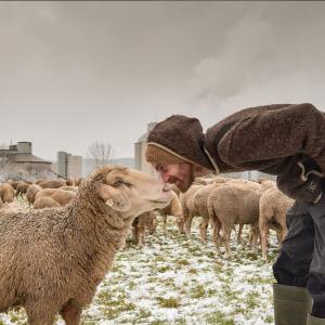 Sven de Vries und seine Schafe; Foto: Profilfoto Instagram, Sven de Vries