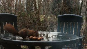 """""""Haus""""-Eichhörnchen des Grimme-Instituts beim Nüsseeinsammeln, Foto: Lisa Wolf/Grimme-Institut"""
